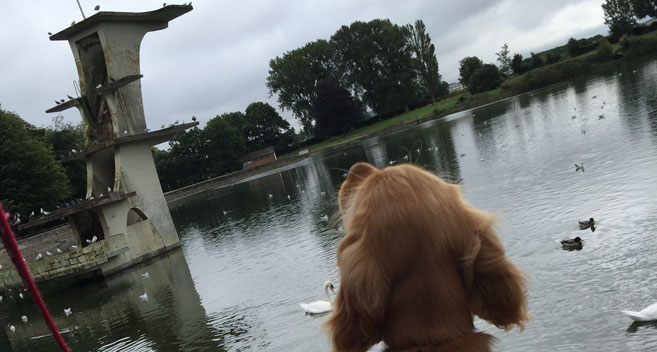 Ruby-Lou at Coate Water