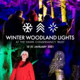 Winter Woodland Lights