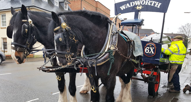 Wadworth Shire Horses