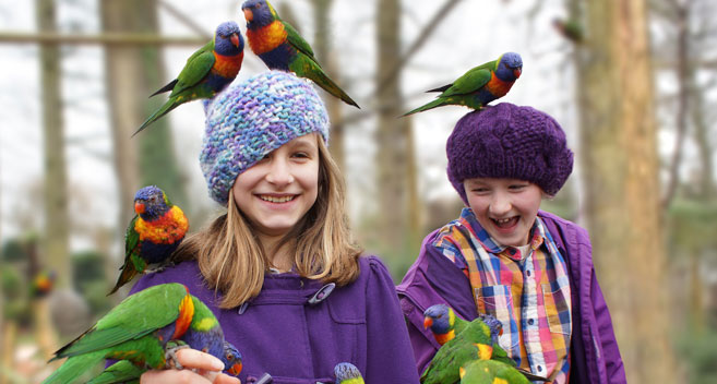 children and parrots at Longleat safari park