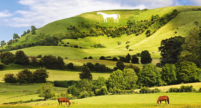 Rolling chalk hills in Wiltshire