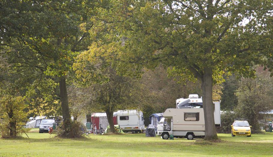 Camping in the Savernake Forest