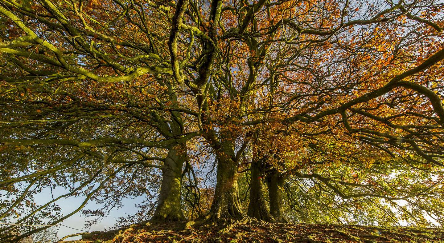 Autumn Trees at Avebury