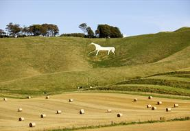 The White Horse at Cherhill