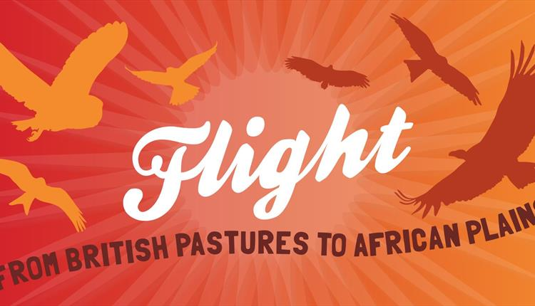 Flight – from British Pastures to African Plains