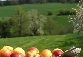 Cricklade Orchard Pruning and Maintenance